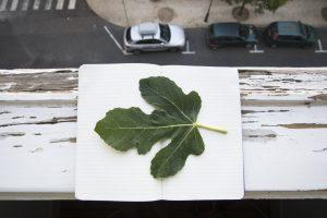 Urban botanics (Lisbon), Korrespondance, Galleri Image. 2015. Fotografi. 34 x 50 cm (indrammet)